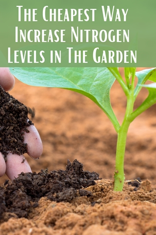 The Cheapest Way Increase Nitrogen Levels in The Garden