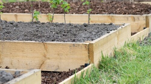 What Wood Is Best For Building A Raised Garden Bed?