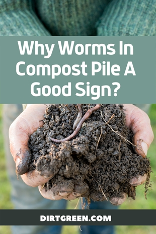 Why Earthworms In The Compost Pile A Good Sign?