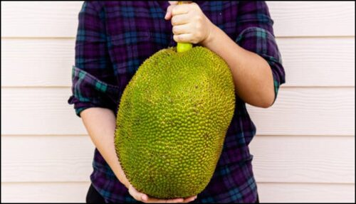 Here's How To Know When A Jackfruit Is Ripe And Ready To Eat
