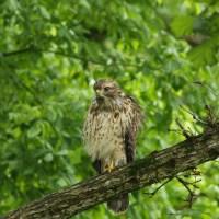 Armchair Birding