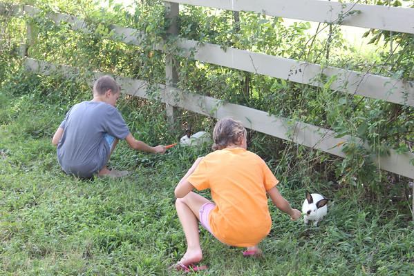 Coaxing Bunnies