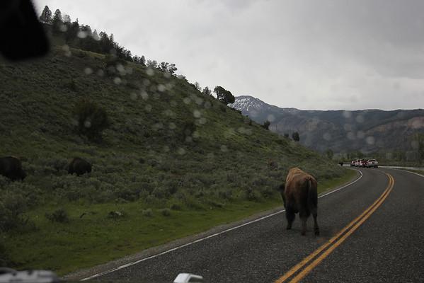 Bison Traffic Hour