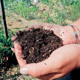 Treat Soil Better than Dirt. Interview with The Sacramento Bee