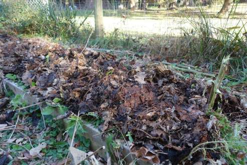 Using leaf mold compost