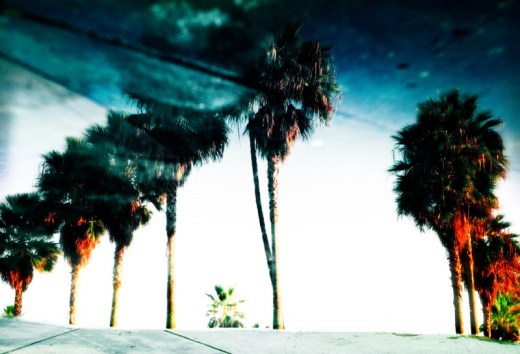 a water puddle reflects the towering palm trees at Venice Beach california