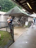 Lemur cages.