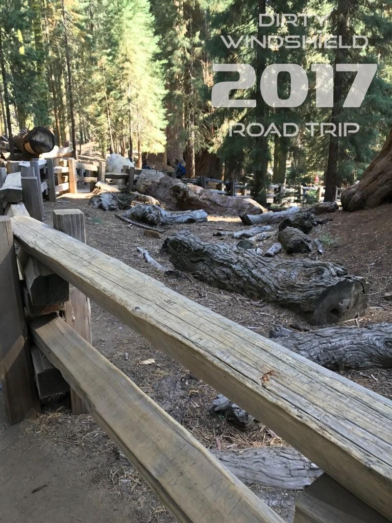 General Sherman's Fallen Limbs, Sequoia National Park