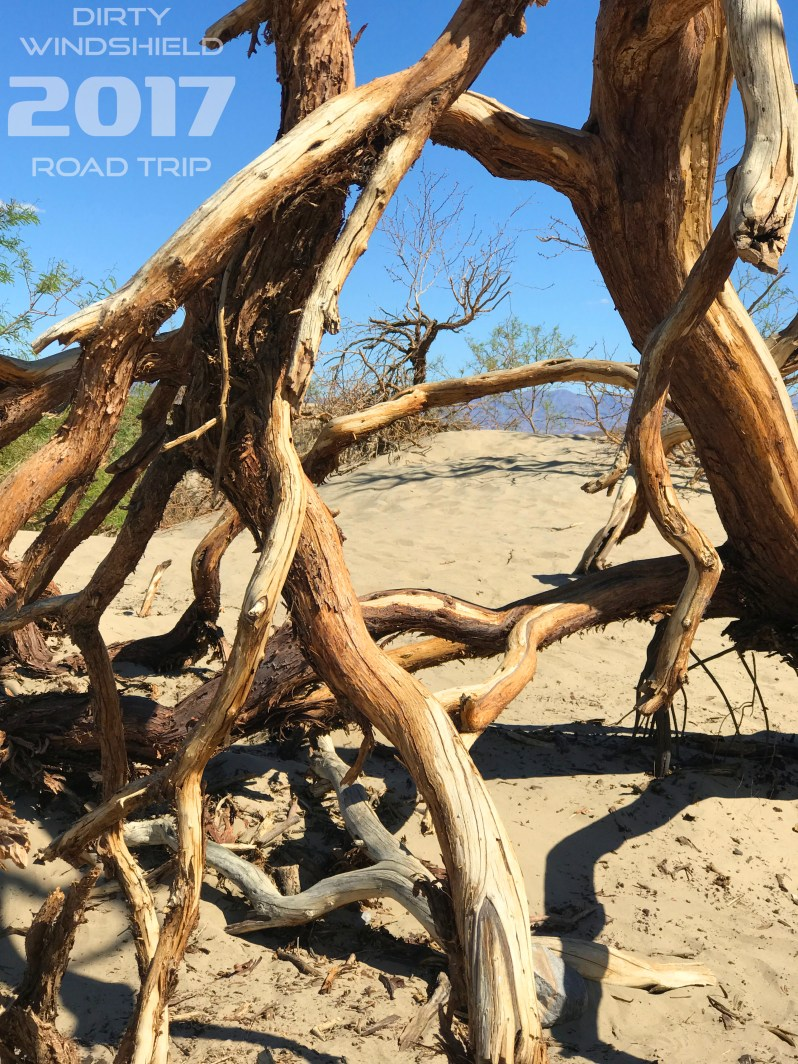 Trees on the Dunes