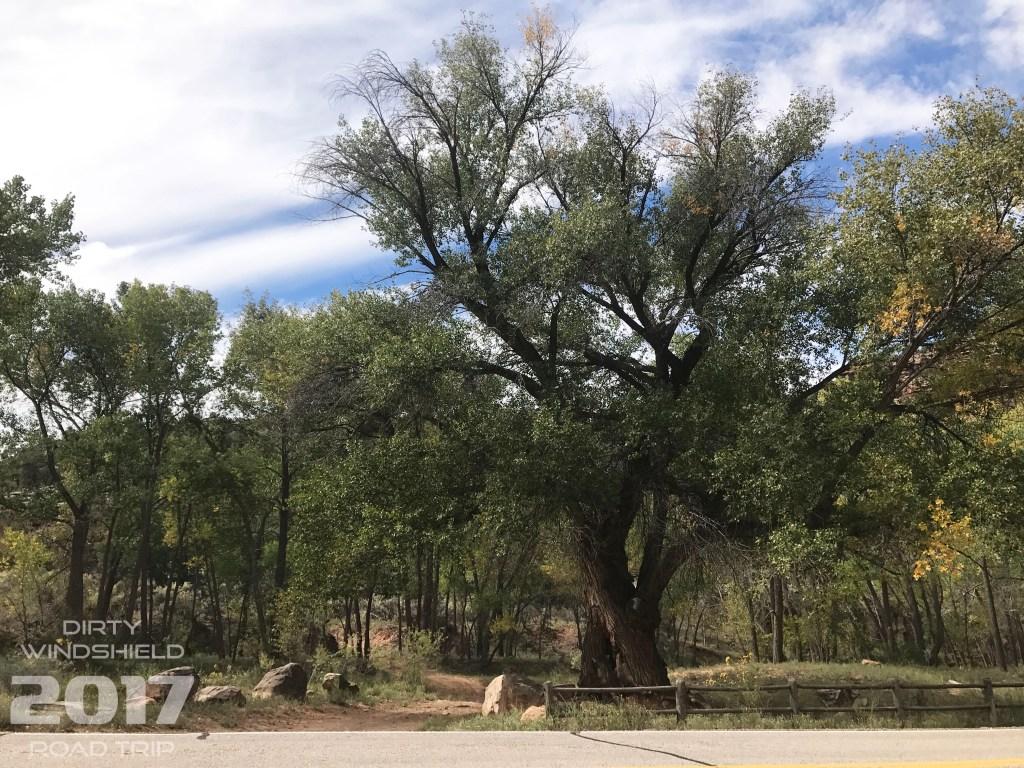 Roadside Tree Canyonlands
