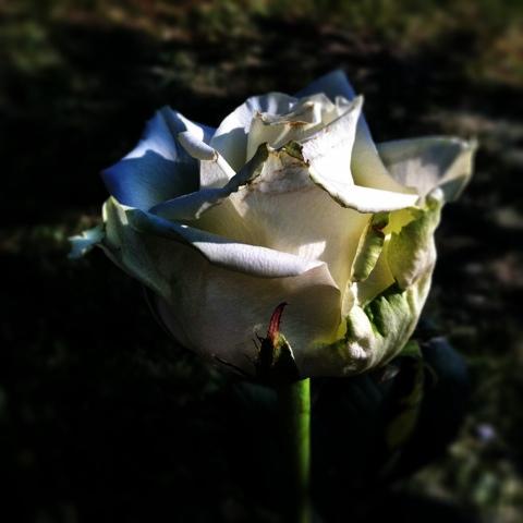 20110605-210521.jpg