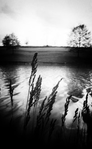 """By the Lake."" Black and white image: a vertical picture of lake water in the mid-ground, with reed-like stalks standing dominant in the foreground, and a horizon line in the background."