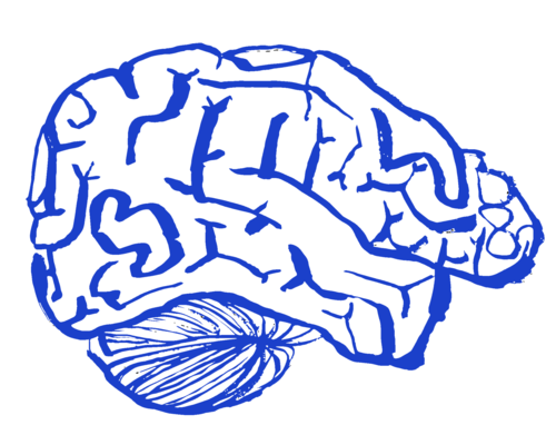 Drawing of a brain in indigo blue against a white background