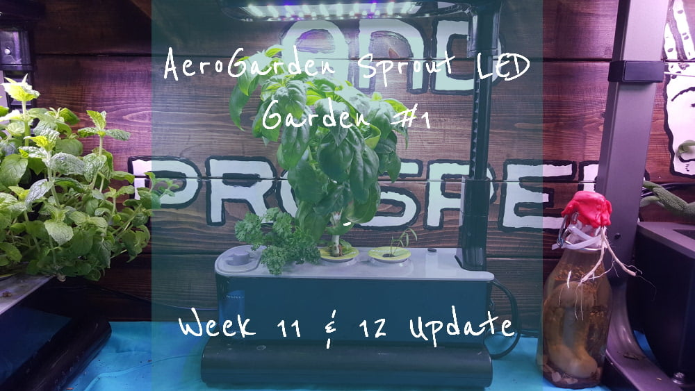 AeroGarden Sprout LED Garden 1 Week 11 – 12 title card