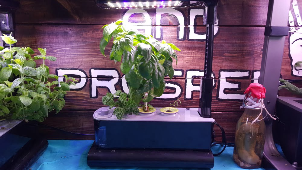 AeroGarden Sprout LED Garden 1 Week 12 before harvest
