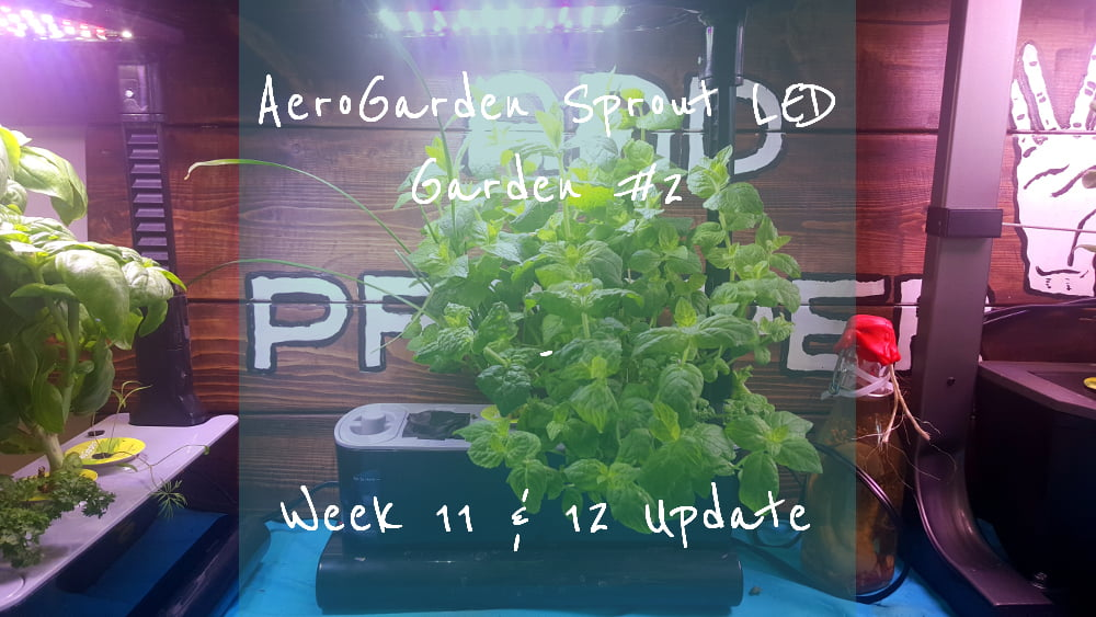 AeroGarden Sprout LED Garden 2 Week 11-12 title card