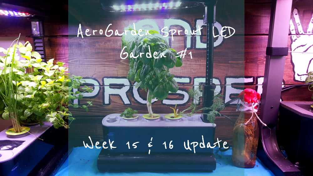 AeroGarden Sprout LED Garden 1 Week 15 – 16 update title card
