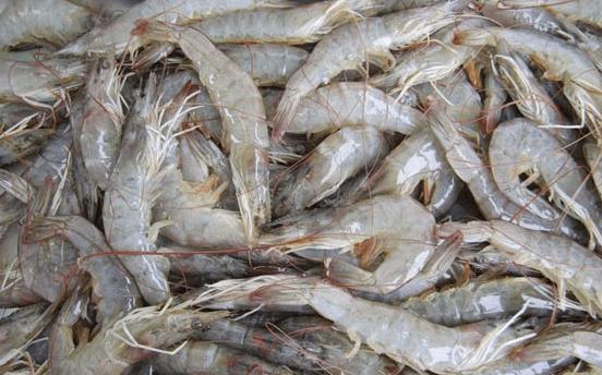 Gambas Shrimp