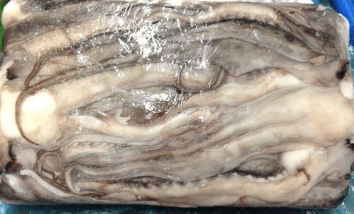 Giant Squid Tentacle
