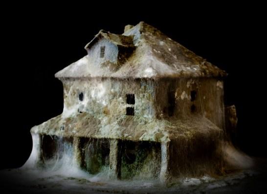 Daniele Del Nero, After Effects, paper, flour, mould.