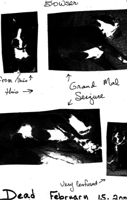 A photocopied entry of the records kept by Harriett McFeely, showing photos of Bowser the dog and notes. Bowser's body and disposition index the presence of otherwise-invisible chemicals. See Shapiro for more details.