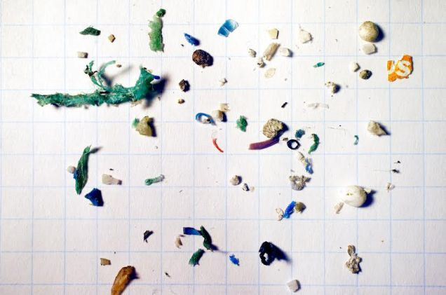 These plastics were collected by BabyLegs in the Mystic River, Boston. The squares on the page are 1 cm x 1 cm.