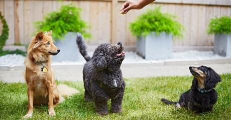 Animal Training Online Course
