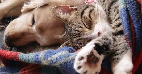 Pet Daycare