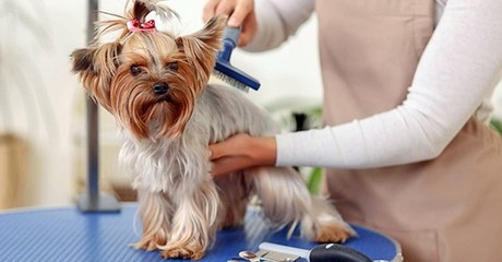 Advanced Pet Grooming Online Course