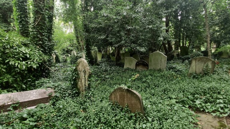 Graves covered in ivy stand in a forest cemetery