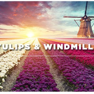 The Sophisticated Traveler – Tulips & Windmills
