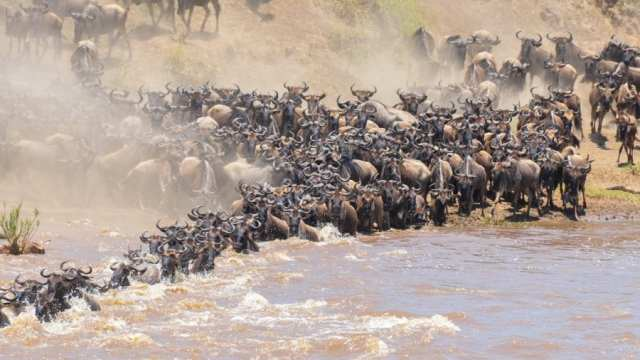 10 Best Lodges Camps to Spend on a Wildebeest Migration Safari