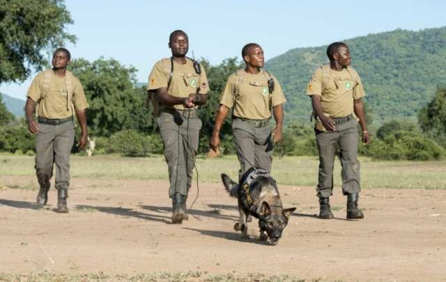 CONSERVATION CRISIS:- Wildlife at risk due to Poaching and COVID 19