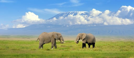 Best Photos of Mt. Kilimanjaro and Amboseli National Park Elephants