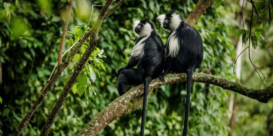 New Protocols for Tourists Visiting Rwanda