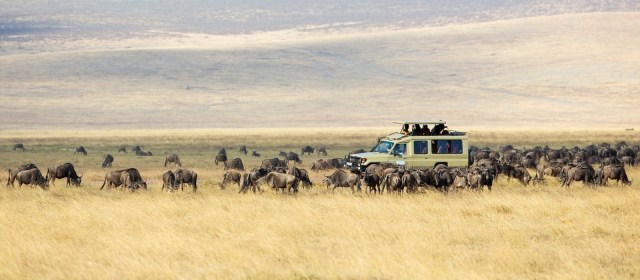 Discover Africa Safaris Starts Safari Operations in Africa.