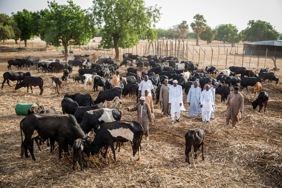 Nigeria's President may have suspended RUGA project