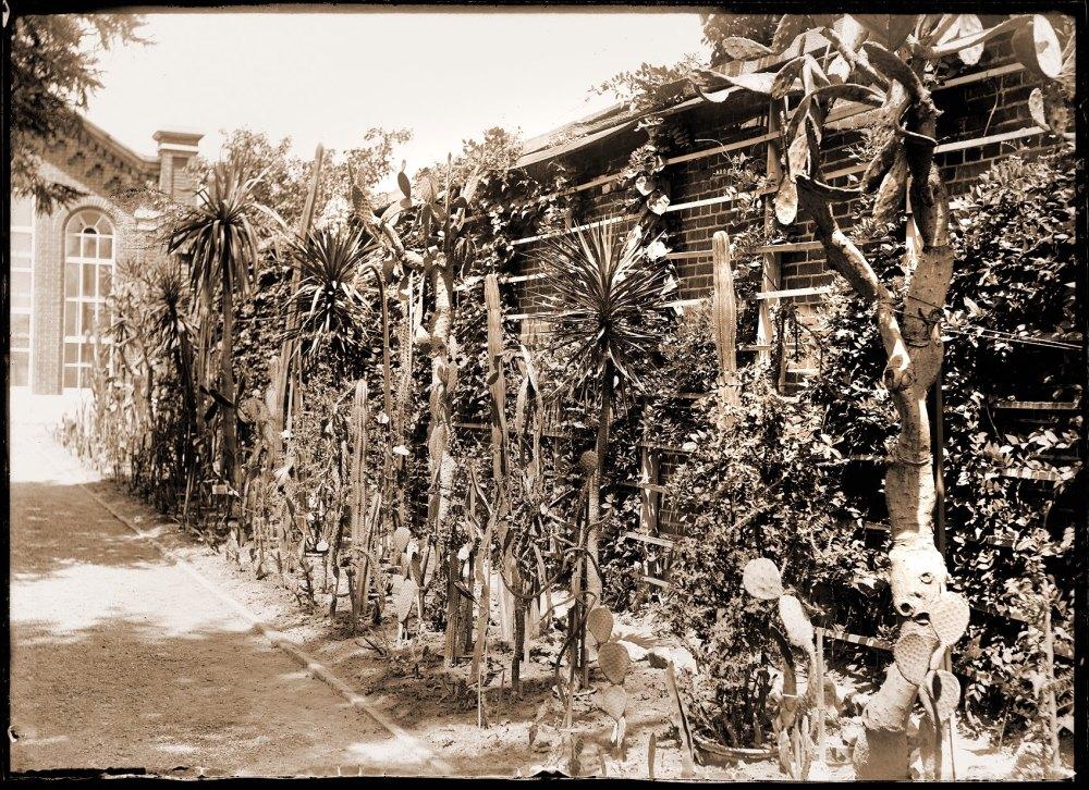 cactus history 2