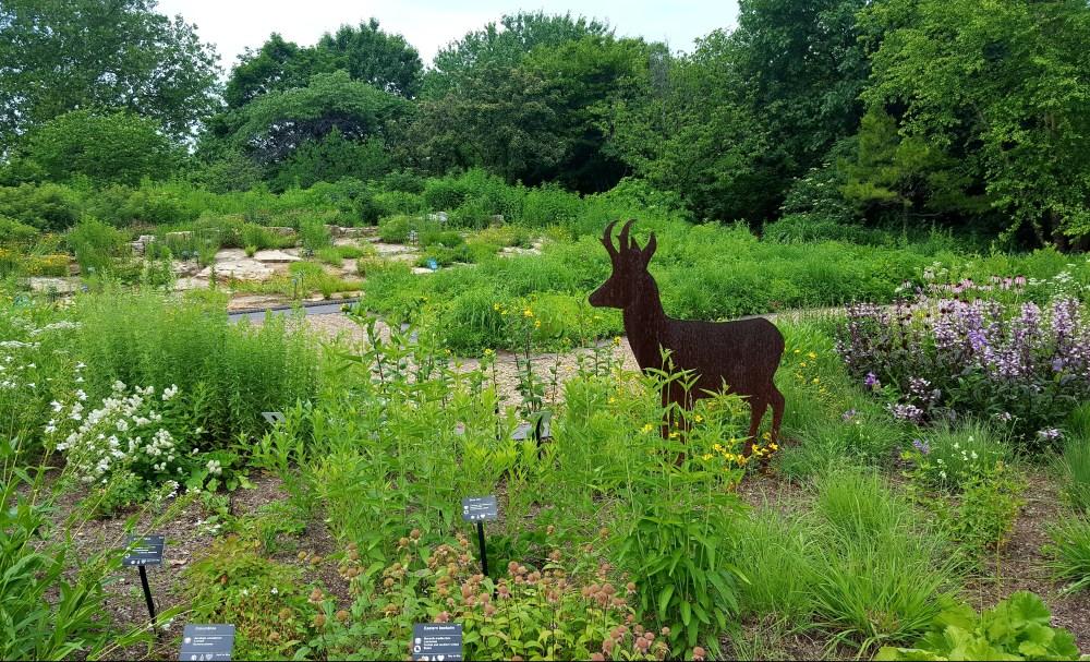 Kemper Prairie Garden