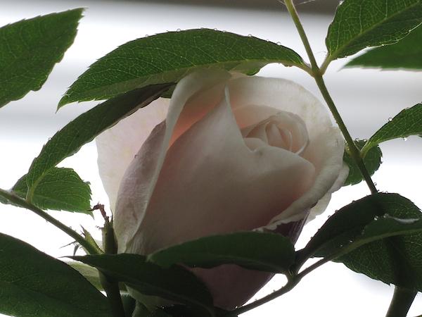 Moorish_Garden_Incrocci01