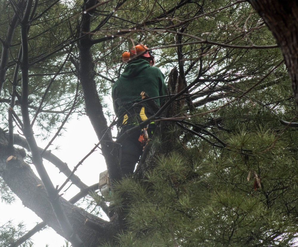 tree person_Jered Willis
