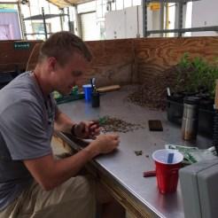 Garden horticulturist Caleb Dvorak extracting seeds of Karomia gigas.