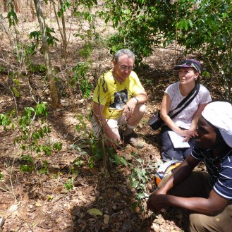 Roy Gereau of the Missouri Botanical Garden, Kirsty Shaw of BGCI, and Fandey Mashimba of TTSA discussing the Karomia gigas.