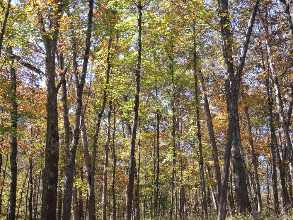 Shaw_Nature_Reserve_Incrocci15