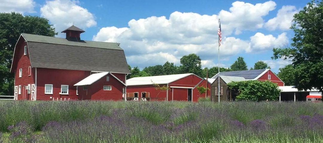 Hidden Spring Lavender Farm & Shoppe