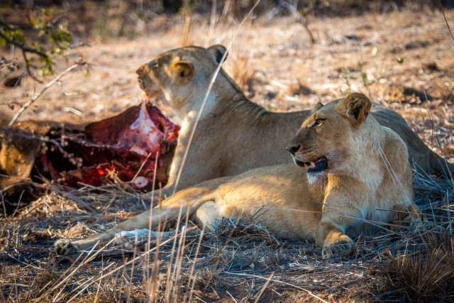 Top 10 National Parks- Kruger National Park