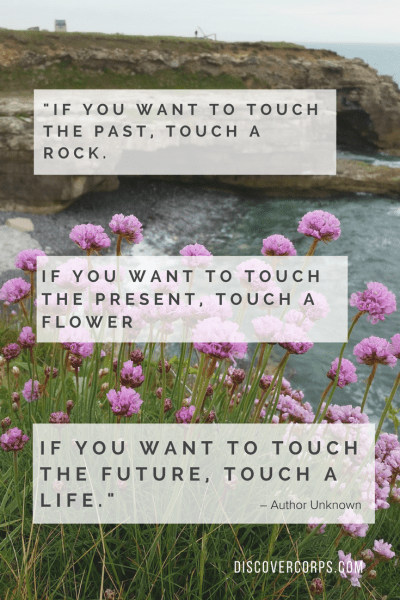 Quotes About Volunteering -If you want to touch the past, touch a rock. If you want to touch the present, touch a flower. If you want to touch the future, touch a life.-