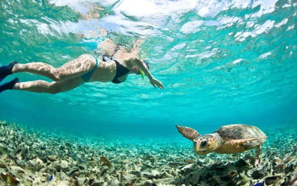 tourist in belize snorkeling with a sea turtle