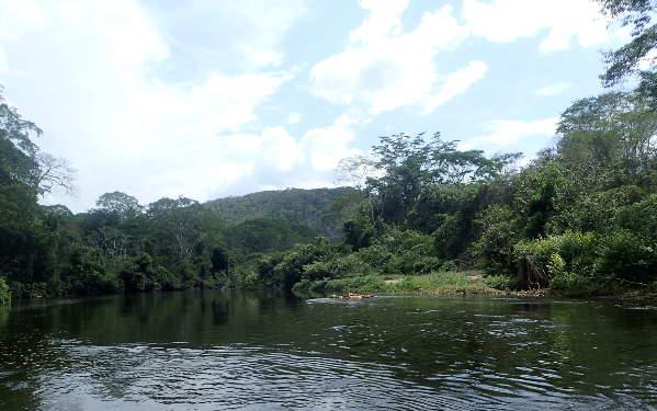 jungle tour of belize