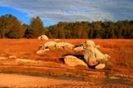 sierra laguna meadows
